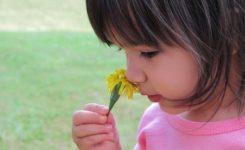 Estudian cómo se codifican los olores en el cerebro