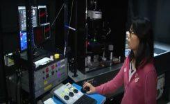 Microscopio permite observar a las neuronas mientras están trabajando